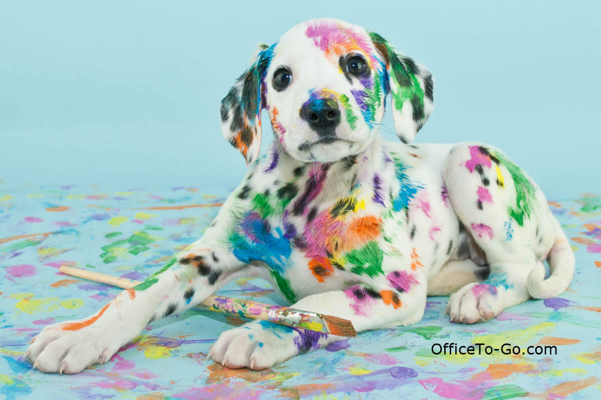 Dalmation Puppy with colorful paint spots on the floor and on the puppy